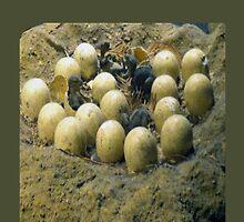 dino's eggs by roggcar