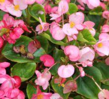 Pink Blooms Sticker