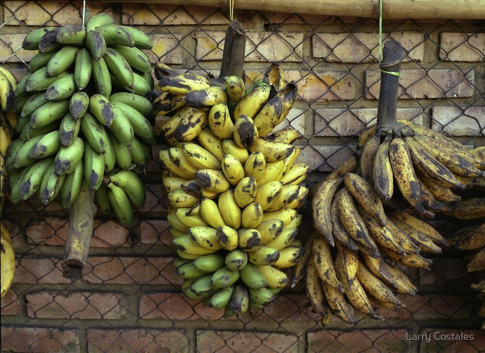 Colombian Platanos by Larry Costales
