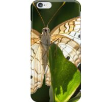 A Showy White Peacock iPhone Case/Skin