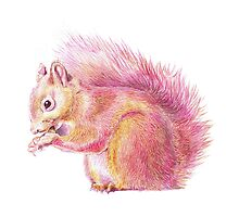 Pink Squirrel by carashanleyart