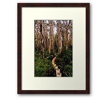 Paperbark coastal forest walk  Framed Print