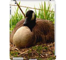 Nesting Canada Goose iPad Case/Skin