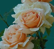 Apricot Nectar Rose From My Garden by Terry Krysak
