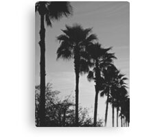 Black & White Palm Coast Canvas Print