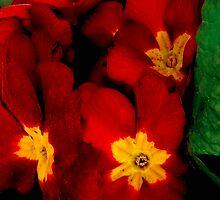 Bright Red Crescendo by Rosemary Sobiera
