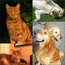 Canine and Feline Collage by Kathryn Jones