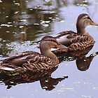 Two Ducks by Linda  Makiej