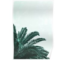 Palm tree abstract Poster