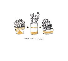 Rude Succulents Photographic Print