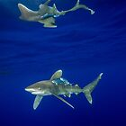 Cruising Oceanic White Tip And Surface Reflection by Brent Barnes