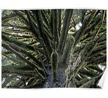 Moss Covered Tree Limbs Poster