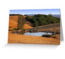 Cows Drink From a Pond in the Petaluma Hills of California Greeting Card