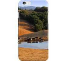 Cows Drink From a Pond in the Petaluma Hills of California iPhone Case/Skin
