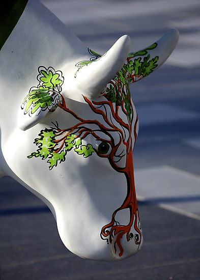 Cow with tree, Ebrington, Derry by George Row