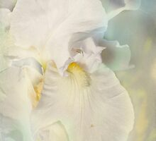 Pastel Iris #2 by Elaine Teague