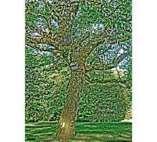 Walt Disney Tree Photographic Print