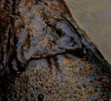 crocodile in kakadu Sticker