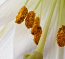 Lily Flower Macro Sticker