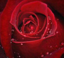Rose in black Sticker