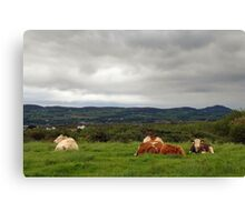 It's a tough life... Canvas Print