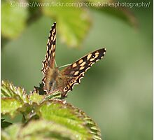 Ringlet Butterfly Photographic Print
