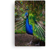Pumapungo Peacock Canvas Print