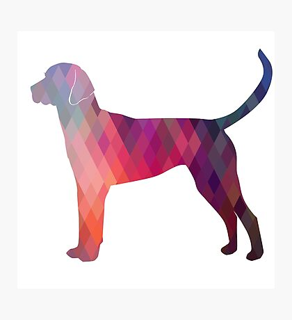 English Foxhound - Colorful Geometric Pattern Silhouette - Pink Photographic Print