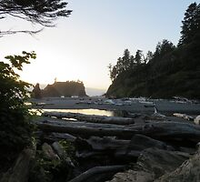 Driftwood along Ruby Beach by jkmarshall