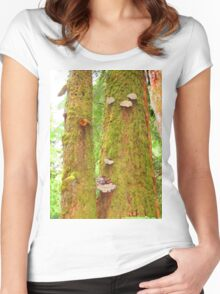 Moss Covered Trees Women's Fitted Scoop T-Shirt