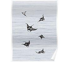 Manta rays in flight Poster
