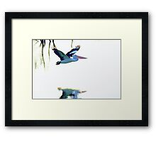 Pelican on the Move Framed Print