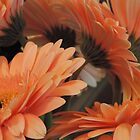 Apricot Gerberas #2 by Marilyn Harris