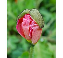 Poppy Mustaches Photographic Print