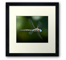 Dragonfly in flight Framed Print