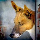 The Dog that looked like a Fox by Clare Colins
