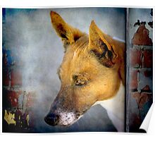 The Dog that looked like a Fox Poster
