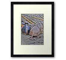 The Celts were here Framed Print