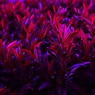 Purple Shades by crystofurr
