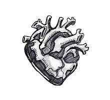 Human heart ink drawing Photographic Print