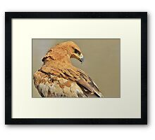 Tawny Eagle - Majestic - African Wild Bird Background Framed Print