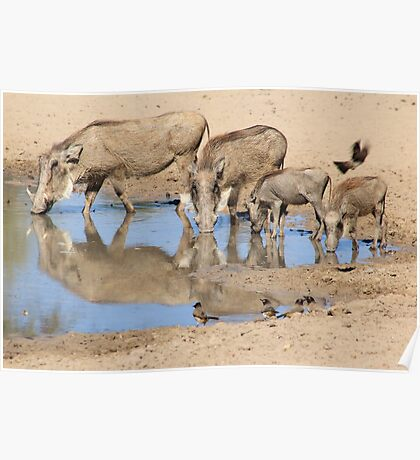 Warthog Family - African Wildlife Poster