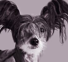 I'm All Ears... by Laurie Minor