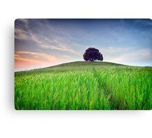 The Tuscany Chestnut tree Canvas Print