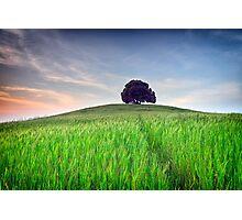 The Tuscany Chestnut tree Photographic Print