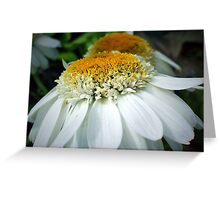 Just One Petal Out Of Place Daisy.... Greeting Card