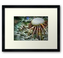 Puffed Out Framed Print