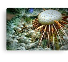 Puffed Out Canvas Print