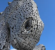 Looking up at a Kelpie by John Messingham