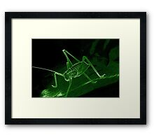Neon-Edged Cricket - Green Framed Print